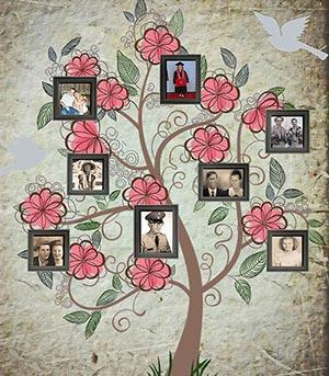 Family tree with photos hanging on it